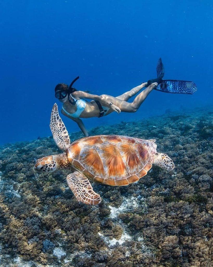 Alam Bawah Laut Lombok Indah